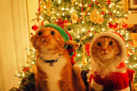 http://www.7mednews.ru/uploads/posts/2014-11/1416474648_christmas-cats-480x800.jpeg